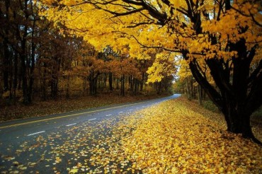 2013-11-06_01_Autumn Road Yellow Trees Leaves