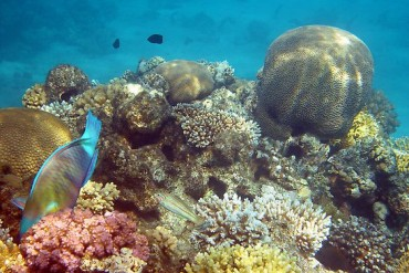 2013-11-13_04_Red Sea Eilat Coral Reef Israel