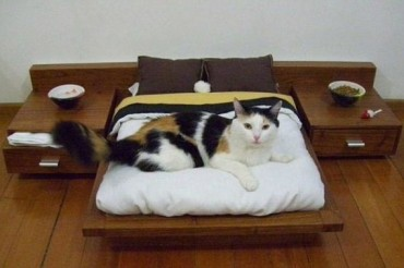 2013-12-26_03_Luxury Platform Bed for Cats