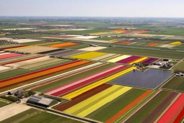 2014-04-17_01_Netherlands-tulip field