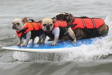 2014-07-16_05_Surfing Dogs California USA